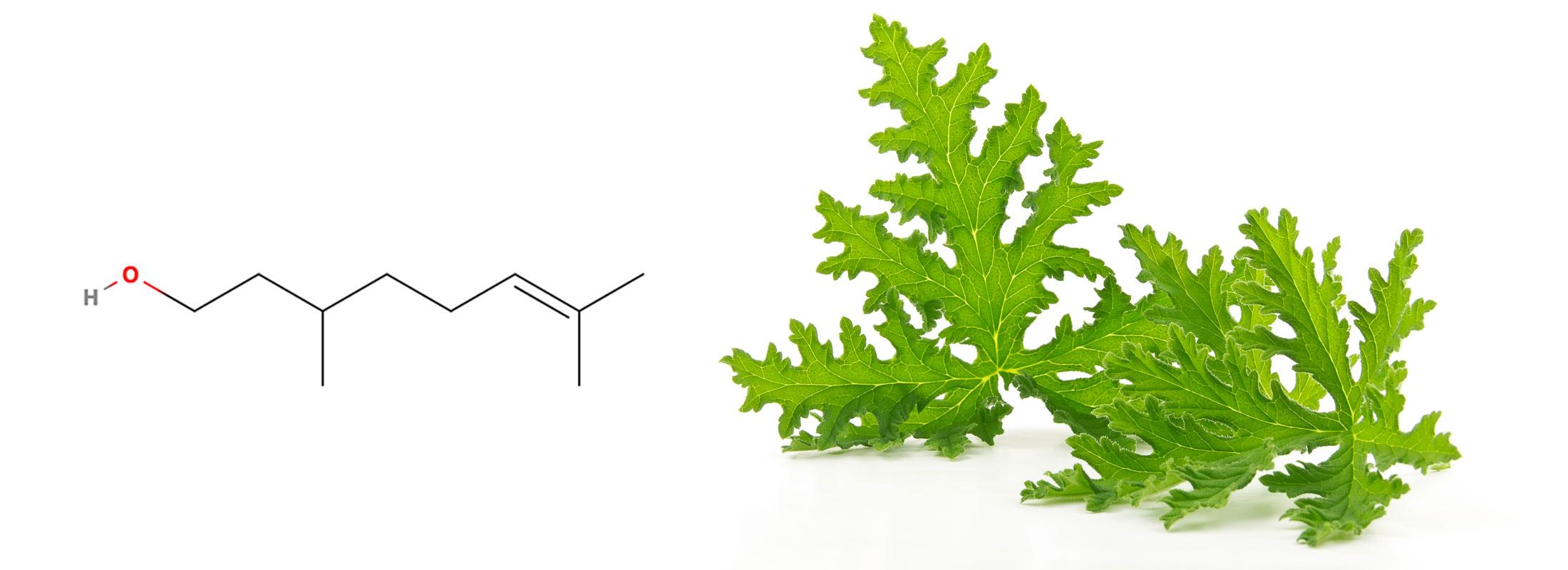 Floraplex - What is Citronellol?