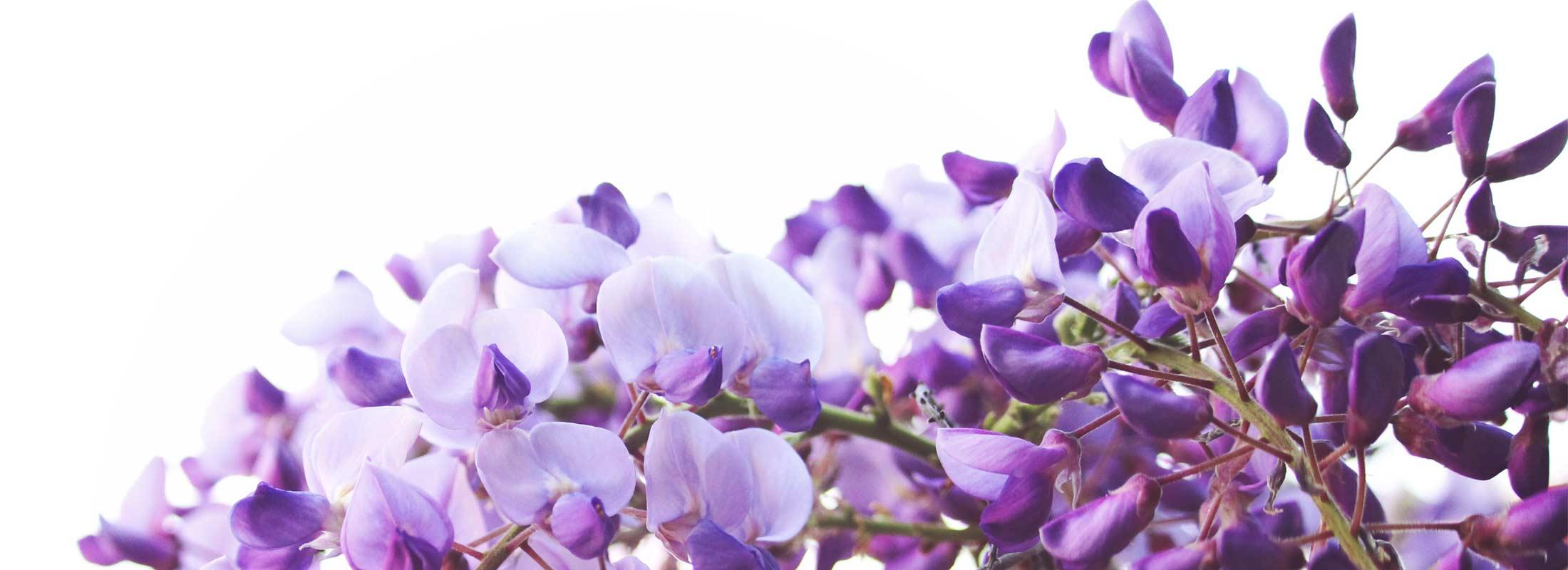 Floraplex Terpene Extraction