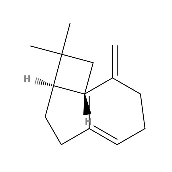 Beta-Caryophyllene Terpene Molecule